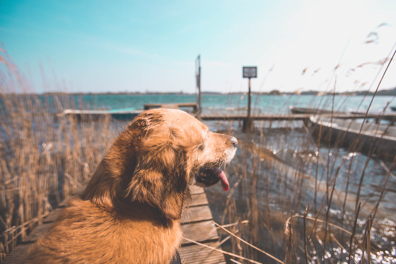 Der-Schaalsee-ist-sehr-Hundefreundlich