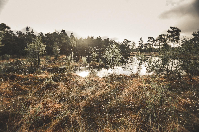 Die-Wollgrasbluete-im-Pietzmoor-bei-Schneverdingen-bei-Sonnenaufgang