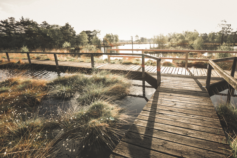 Gerade-in-der-Morgensonne-oder-in-der-Abenddaemmerung-ist-die-Wollgrasbluete-in-der-Lueneburger-Heide-schoen