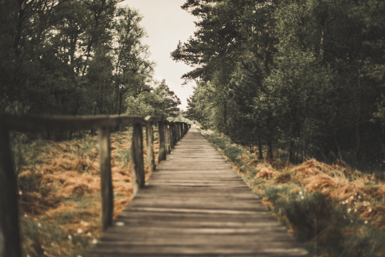 Weg-Wollgrasbluete-Lueneburger-Heide