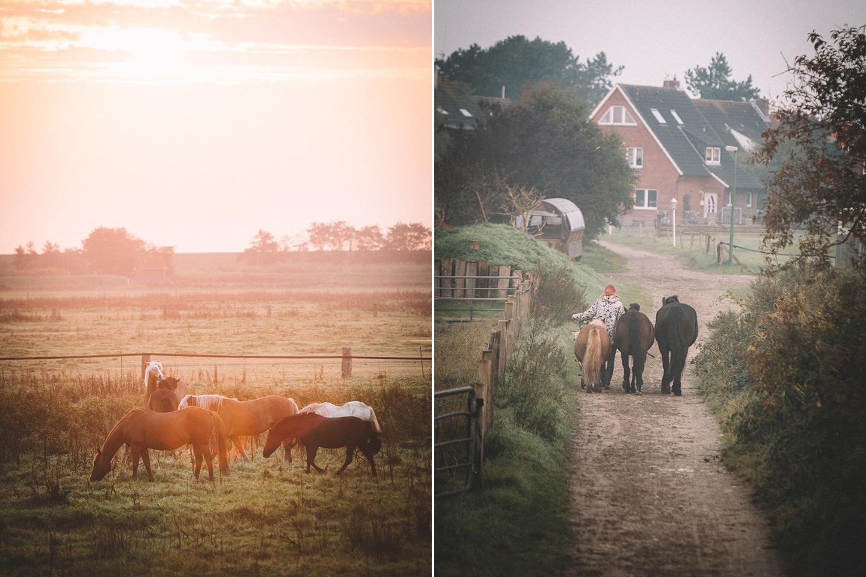 Pferde im Sonnenaufgang auf der Insel Langeoog.