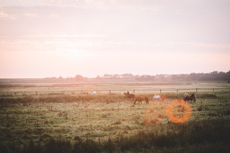 Der Sonnenaufgang bei einer Pferdekoppel auf der Insel Langeoog.