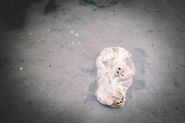 Wir-haben-auch-eine-Auster-bei-der-Wattwanderung-auf-Langeoog-entdeckt